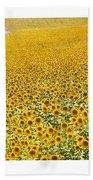 Spanish Sunflowers Beach Towel