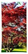 Sparkling Japaneese Maple Tree Beach Towel