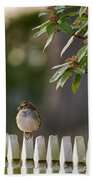 Sparrow In Colonial Williamsburg Beach Towel