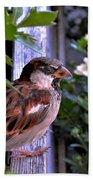 Sparrow In The Shrubs Beach Towel