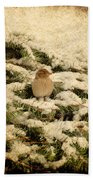 Sparrow In Winter II - Textured Beach Towel