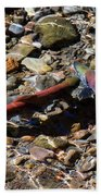 Spawning Salmon - Odell Lake Oregon Beach Towel