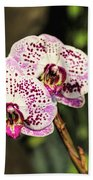 Speckled Orchids Beach Towel