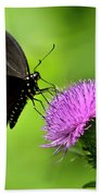 Spicebush Swallowtail Butterfly Beach Towel