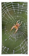 Spider In A Dew Covered Web Beach Towel