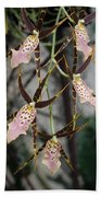 Spider Orchids Beach Towel