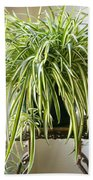 Spider Plant Beach Towel
