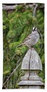 Spiffy Sparrow Beach Towel