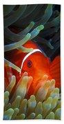 Spinecheek Anemonefish, Great Barrier Reef Beach Towel