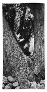 Splitting Tree Beach Towel