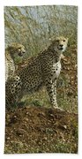 Spotted Cats Beach Sheet