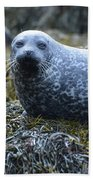 Spotted Coat Of A Harbor Seal Beach Towel