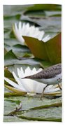 Spotted Sandpiper And Lilies Beach Towel