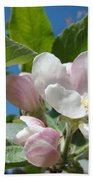 Spring Apple Blossoms Pink White Apple Trees Baslee Troutman Beach Towel