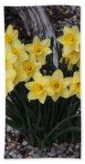 Spring Cheerleaders - Daffodils Beach Towel