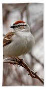 Spring Chipping Sparrow Beach Towel