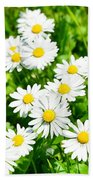 Spring Daisy In The Meadow Beach Sheet