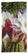 Spring Easter Cactus Blooms 789 Beach Towel