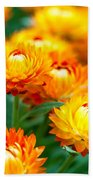 Spring Flowers In The Afternoon Beach Towel
