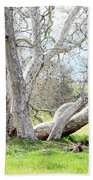 Spring Sycamore Tree Beach Towel