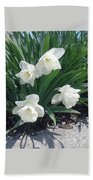 Spring Time Trumpets  Beach Towel