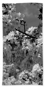 Spring Trees - B And W Beach Towel
