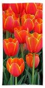 Spring Tulips 210 Beach Towel
