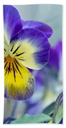 Spring Violas Beach Towel