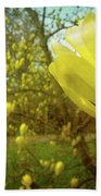 Spring. Yellow Magnolia Flower Beach Towel