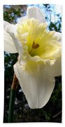 Spring's First Daffodil 3 Beach Towel