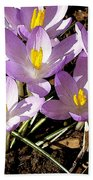 Springtime Crocuses  Beach Towel