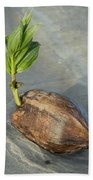 Sprouting Coconut Beach Towel