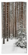 Spruce Among The Pines Beach Towel