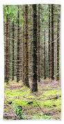 Spruce Forest Beach Towel
