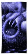 Squamafly Blue Beach Towel by Russell Kightley