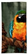 Squawk Beach Towel