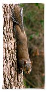 Squirrel 6 Beach Towel