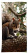 Squirrel 8 Beach Towel