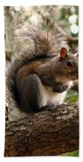 Squirrel 9 Beach Towel
