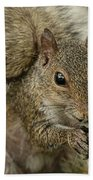 Squirrel And Nuts Beach Towel