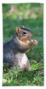 Squirrel Eating A Nut - Eugene Oregon Beach Towel