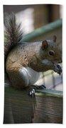 Squirrel II Beach Towel