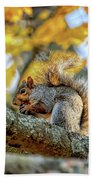 Squirrel In Autumn Beach Towel