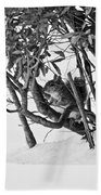 Squirrel In Low Branches Beach Towel