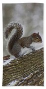 Squirrel In The Snow Beach Towel