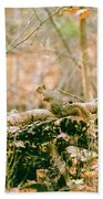 Squirrel In The Woods  Beach Towel