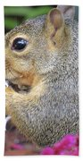 Squirrel - Morning Snack 02 Beach Towel