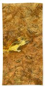 Squirrel On The Ground Beach Towel