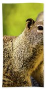 Squirrel On The Rock Beach Towel