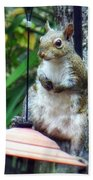 Squirrel Portrait Beach Towel